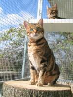 Kattenren Rovac, Rob van de Scheur Winschoten (16)